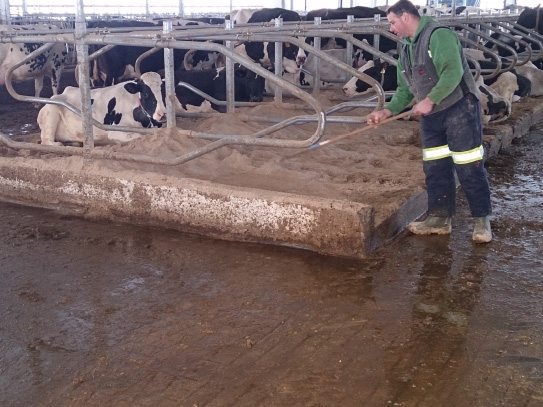 Livestock applications